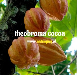 theobroma cocoa tru face ideal eyes